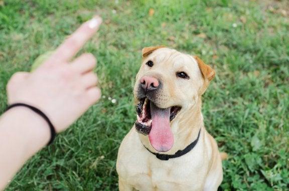 Programmes d'éducation canine : sous le soupçon