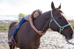 le cheval et le langage corporel