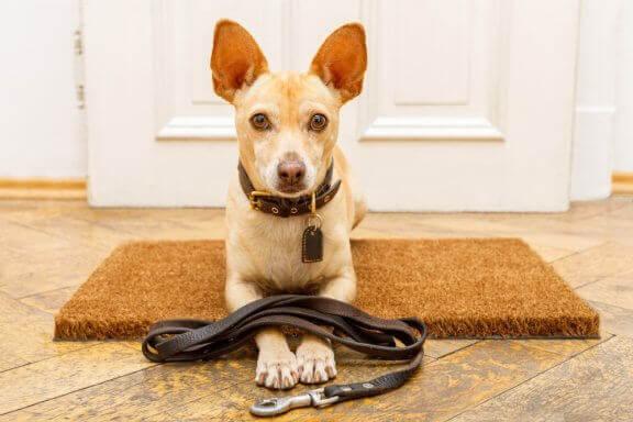 7 erreurs de dressage des chiens