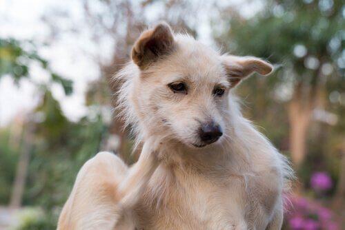 Parasites internes canins et leur impact sur la santé