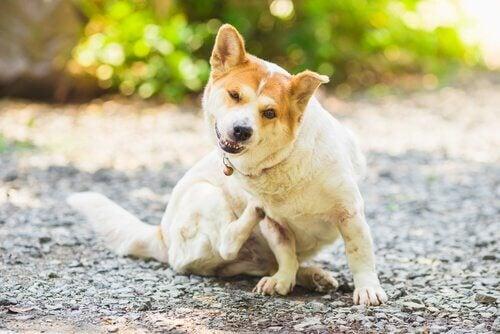 Comment prévenir les parasites chez les chiens et les chats ?