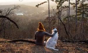 dangers pour votre chien en automne