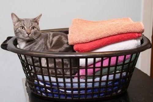 Bobby, le chat ayant survécu à une machine à laver