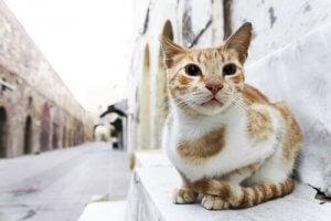 les maladies communes chez le chat