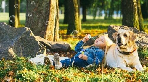5 races de chiens tranquilles