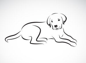 portrait de profil de votre chien