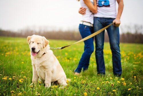 couple promenant un chien jaloux