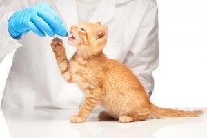 comment donner des comprimés à votre chat ?