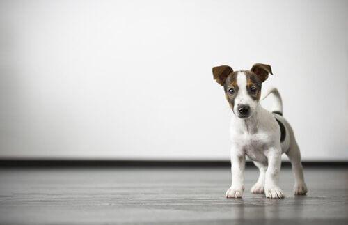 Comment se débarrasser des gaz chez le chien ?