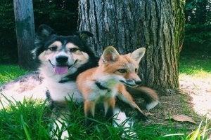 Juniper et Moose