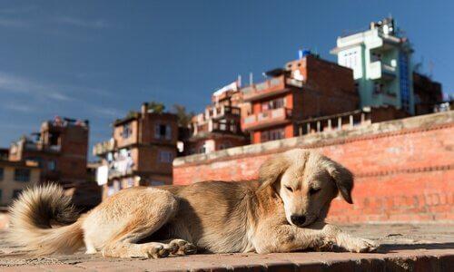 la pollution affecte les chiens