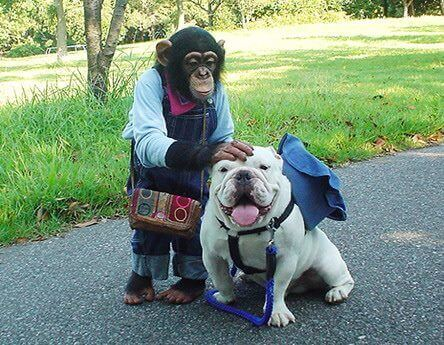 Pankun the monkey and James the dog
