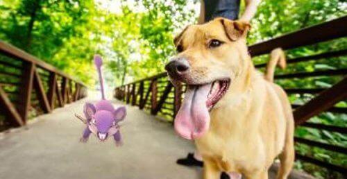 Pokémon Go : comment ce jeu a sauvé la vie d'un chien