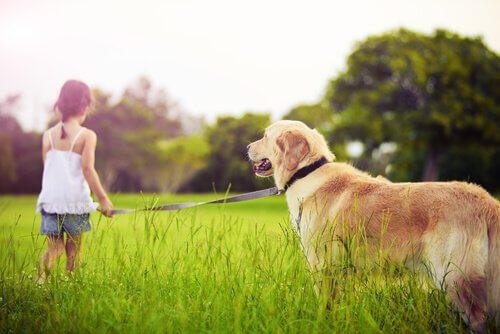 Que faire quand un enfant demande un animal de compagnie
