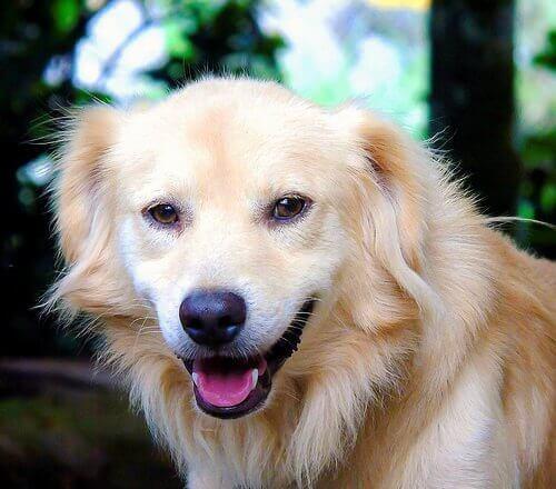 faire sourire votre chien
