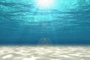 y a-t-il des insectes marins en eau salée ?