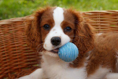 une balle en cadeau pour les chiens