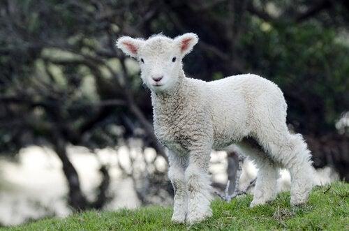 Pensez aux animaux, portez des vêtements végétaliens !