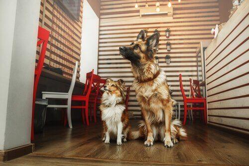 Un café pour discuter entre amis et adopter un chien