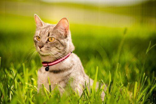 Comment renforcer les liens avec votre chat ?