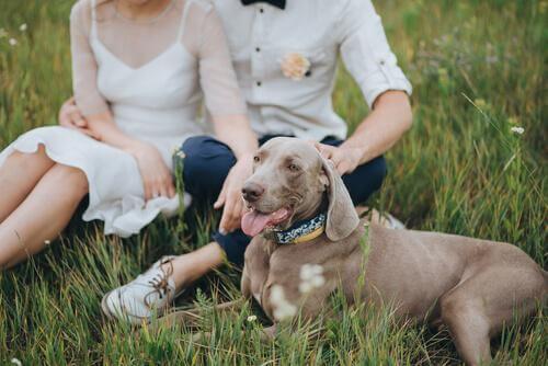 Conseils pour faire participer votre chien à votre mariage