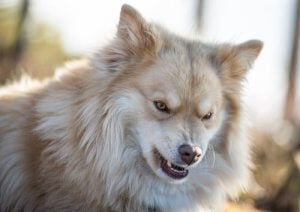 chien ayant besoin de Prozac
