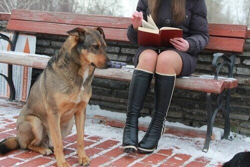 Faites la connaissance des chiens universitaires