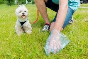 apprendre les règles d'hygiène à son chien
