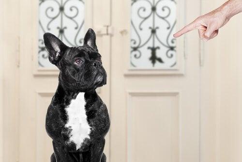 Quelles erreurs commet-on dans le dressage d'un chien ?