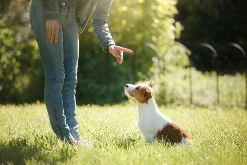 Pourquoi dresser votre animal de compagnie ?