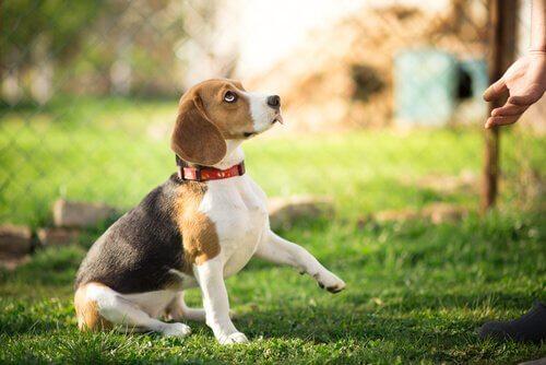 Le dressage d'un chien exige de la constance, du temps et de la patience