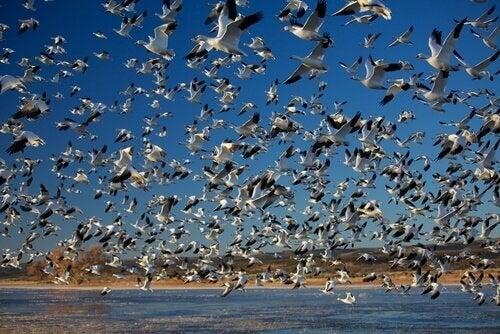 Les migrations massives les plus surprenantes