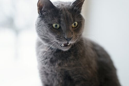 Comment savoir si votre chat est en colère ?