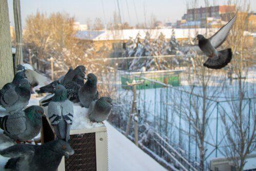 7 façons de faire fuir les pigeons