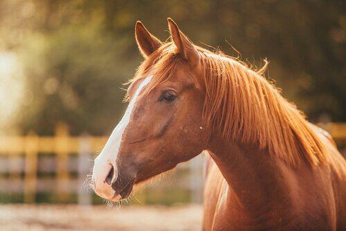 Le stress chez les chevaux