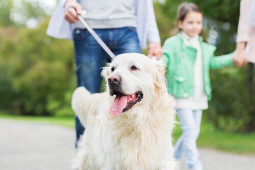 10 choses que votre chien fait pour vous