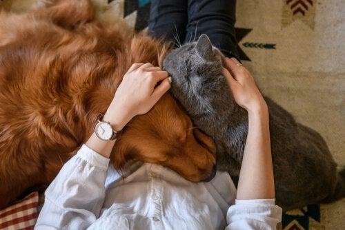 4 façons de démontrer son amour à un animal de compagnie