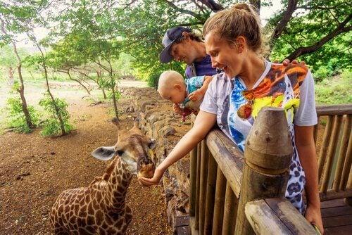 Est-il dangereux de donner de la nourriture aux animaux du zoo ?