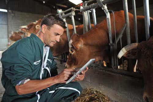 Application d'antiparasitaires sur le bétail