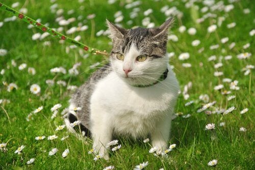 balade pour un chat sociable.