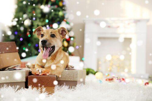 Il existe des fêtes pour les animaux