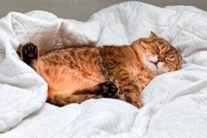 Un chat qui dort profondément