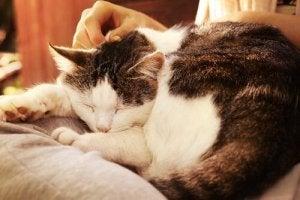 vieux chat qui dort