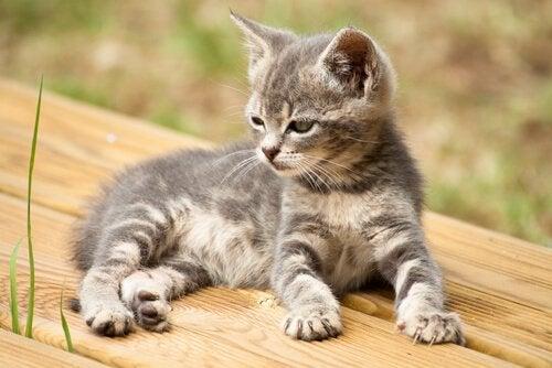 14 noms originaux pour votre chat