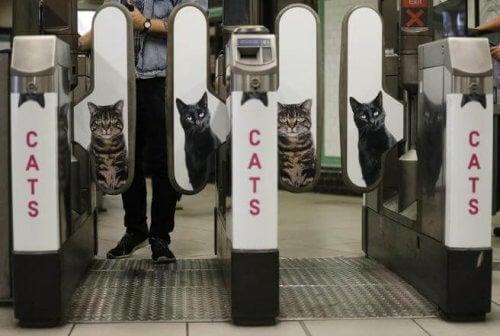 Le métro de Londres supprime les annonces publicitaires pour les remplacer par des photos de chats