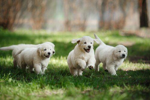 Comment savoir si un chien est bien socialisé