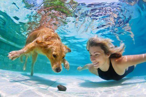 Les chiens peuvent respirer sous l'eau grâce à une invention russe