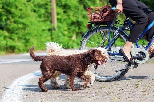 Si vous emmenez votre chien faire du vélo, suivez ces conseils