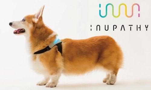 Un collier intelligent qui peut vous dire comment se sent votre chien