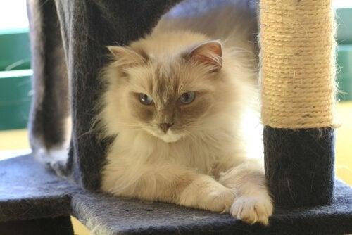 comment faire pour que le chat utilise son griffoir ?